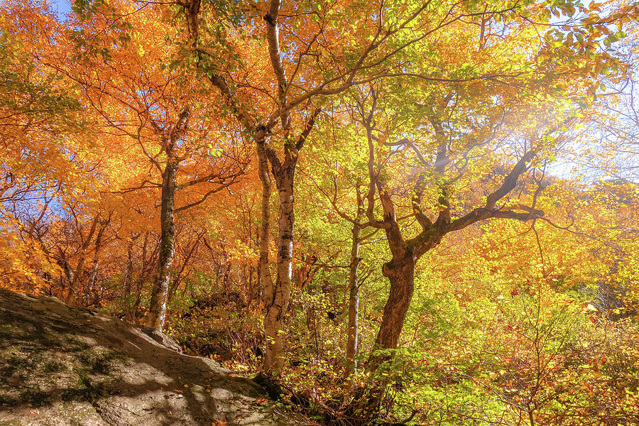 Autumn Morning On Smugglers Notch by Dan Sproul