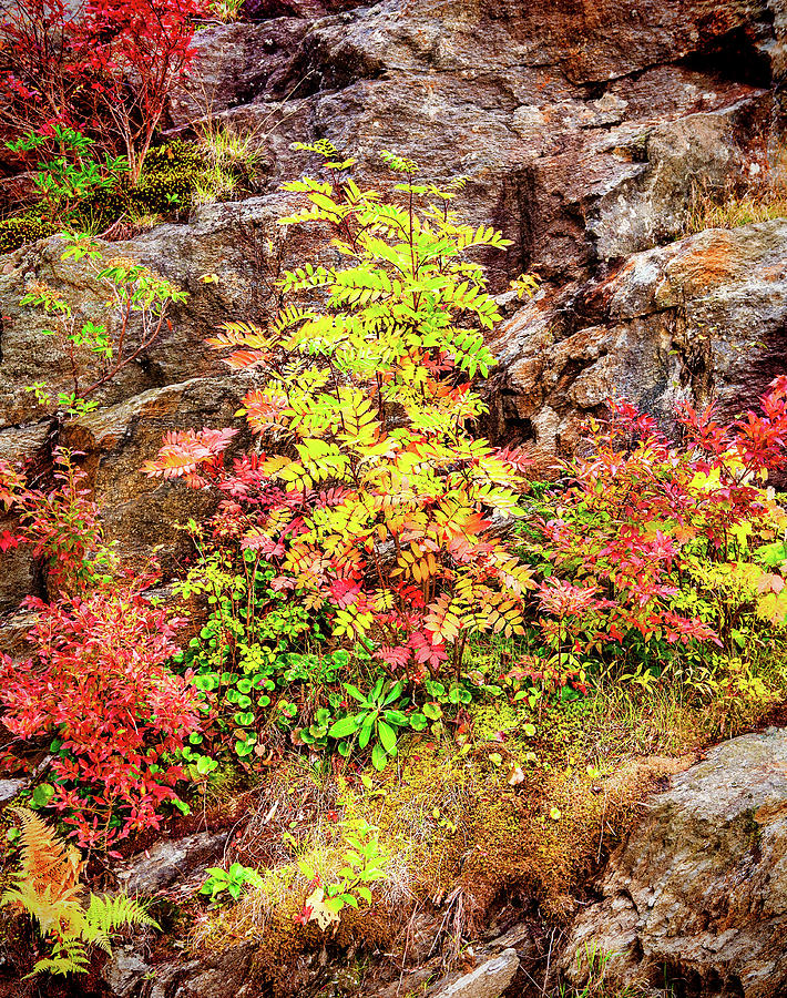 Autumn on a Cliff by Dan Carmichael