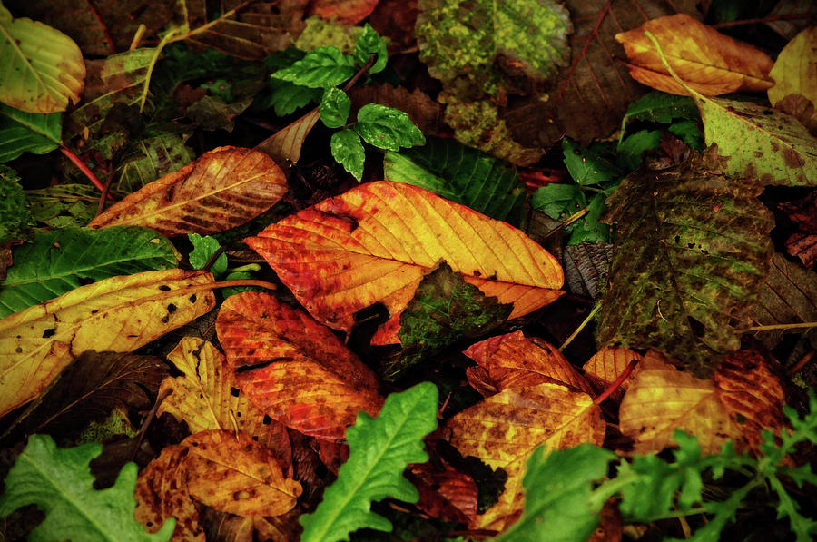 Autumn on the Ground by Tikvah's Hope
