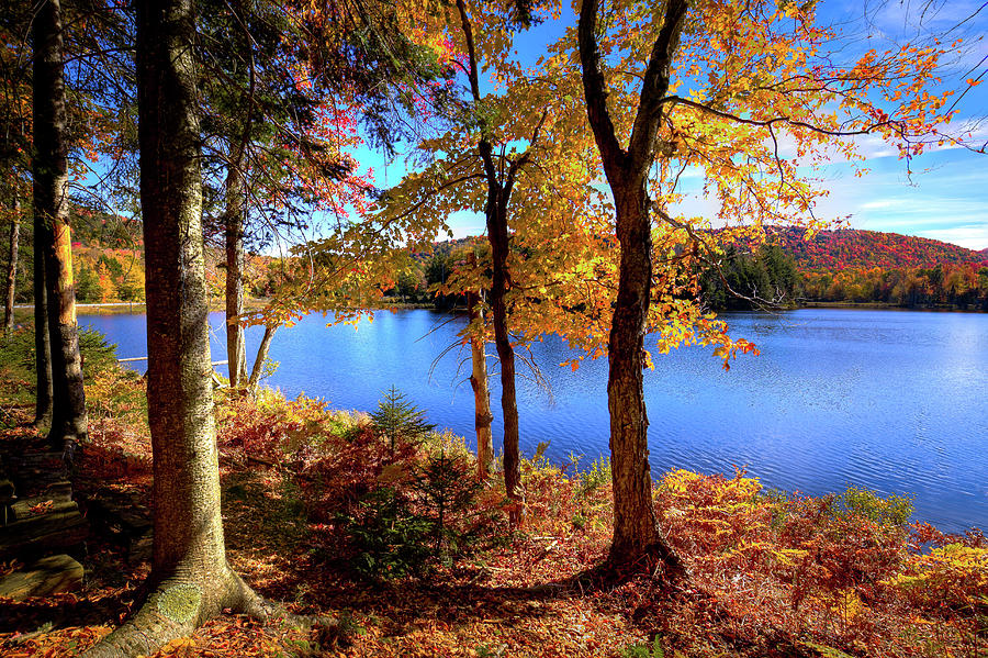 Autumn on the Lake by David Patterson
