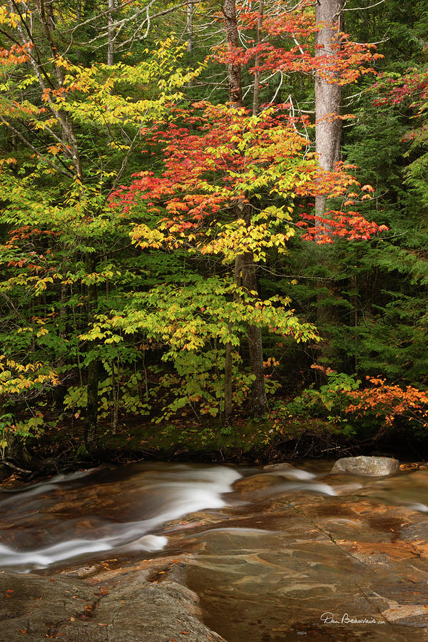 Autumn on the Pemigewasset 2380 by Dan Beauvais