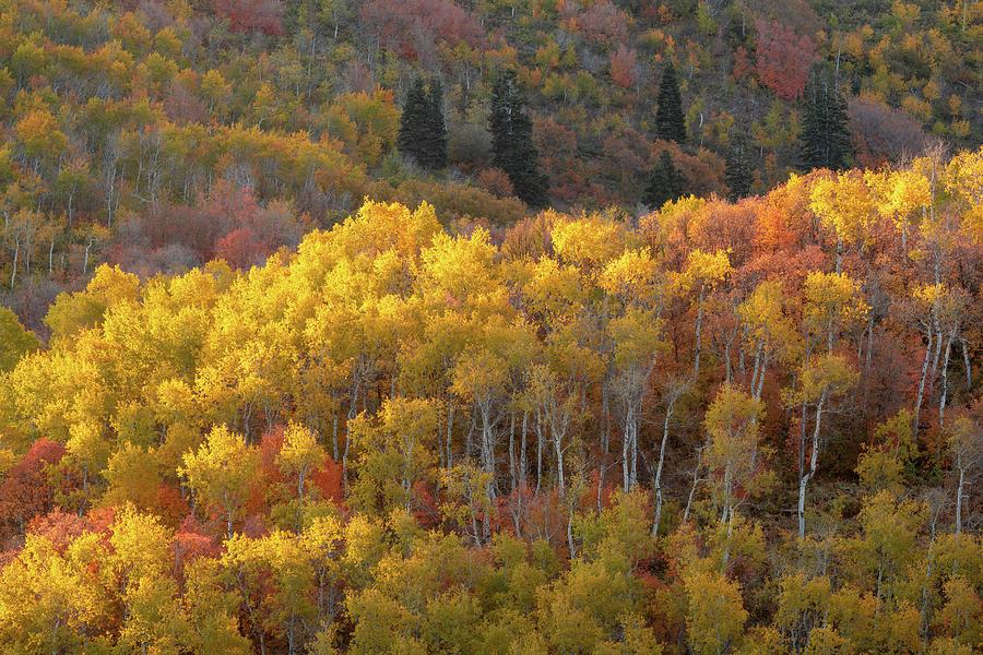 Autumn Palette by Dustin LeFevre