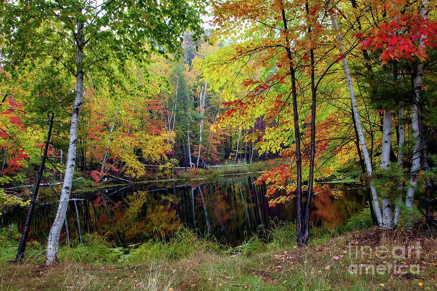 Autumn Palette by Michael Greiner