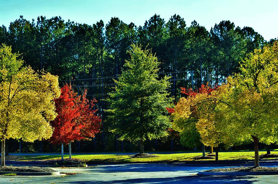 Autumn Pallet by Eileen Brymer