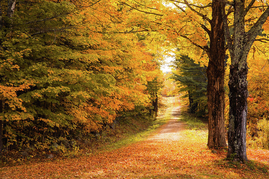 Autumn Path by Robert Clifford