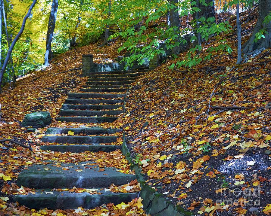 Autumn Path by Steve Ondrus