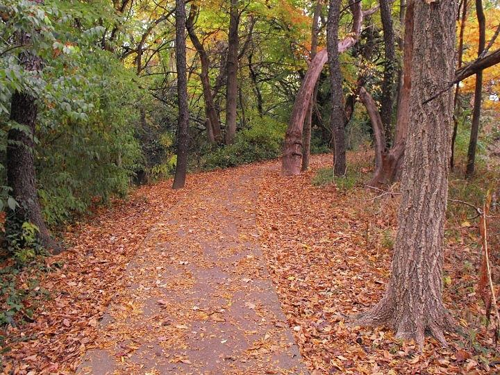 Pathway Photograph - Autumn Pathway by Stacey Wells
