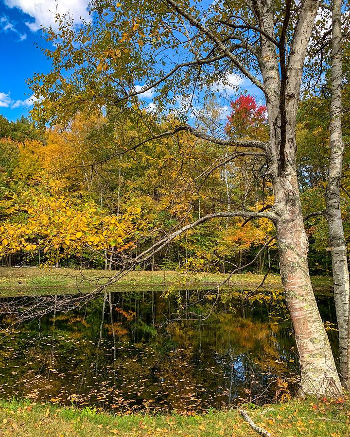 Autumn Pond by Kendall McKernon