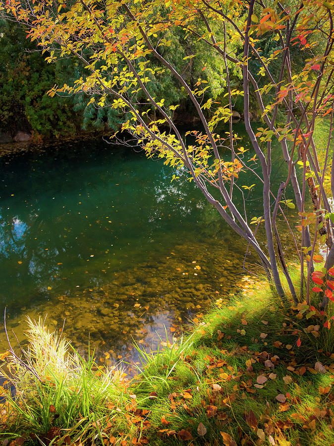 Autumn Pond by Mark Mille