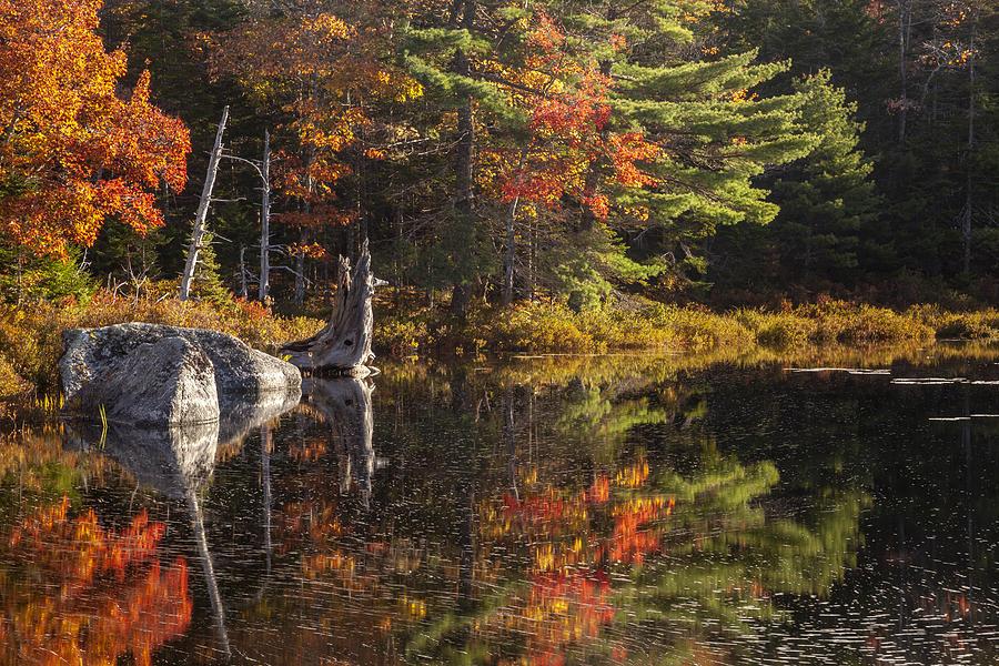 Autumn Pond Moment by Irwin Barrett
