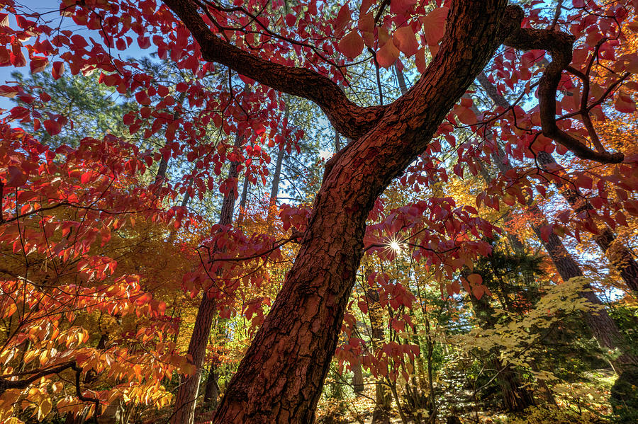 Autumn potpourri - Spokane Japanese Garden by Mark Kiver