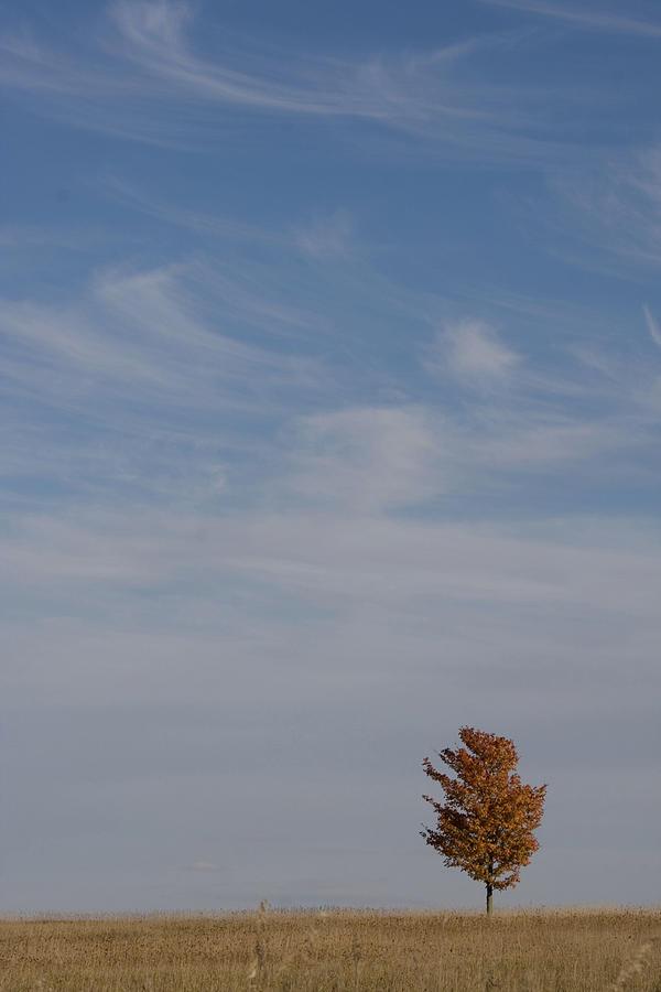 Autumn Prairie Sky by Dylan Punke