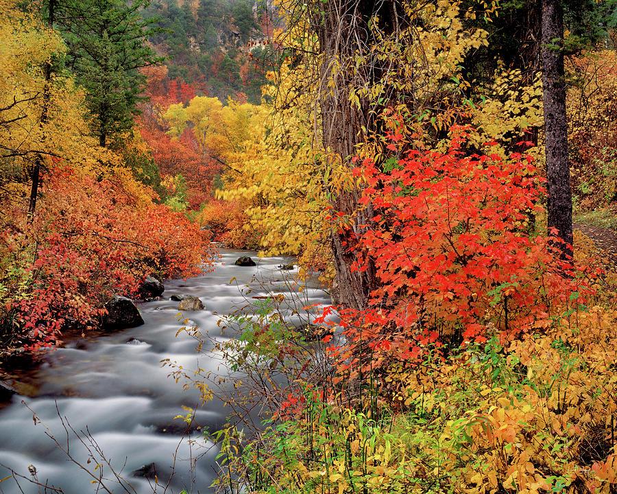 Autumn Photograph - Autumn Rapids by Leland D Howard