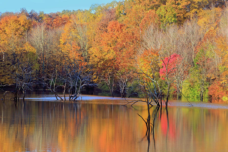 Autumn Reflections by Angela Murdock