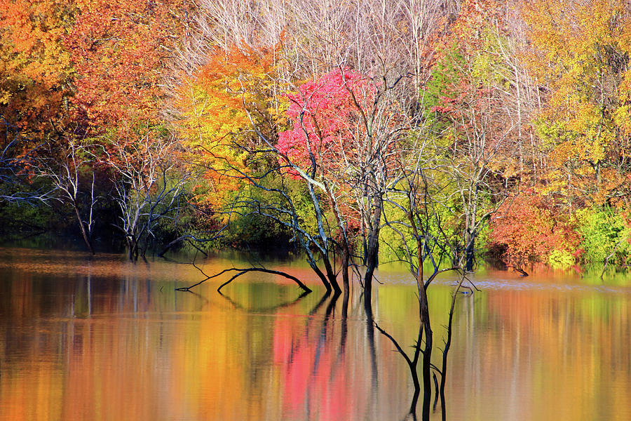 Autumn Reflections at Alum Creek by Angela Murdock