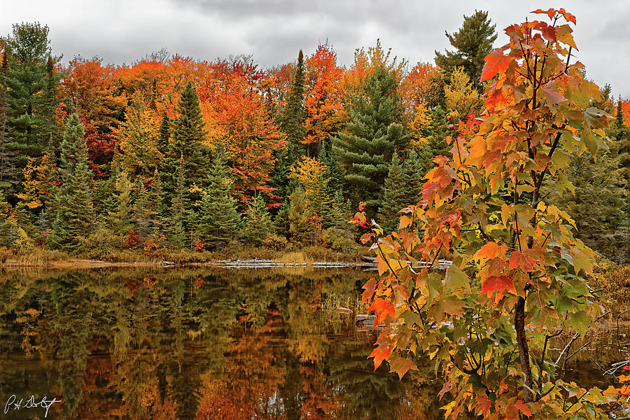 Algonquin Provincial Park Photograph - Autumn Reflections by Phill Doherty