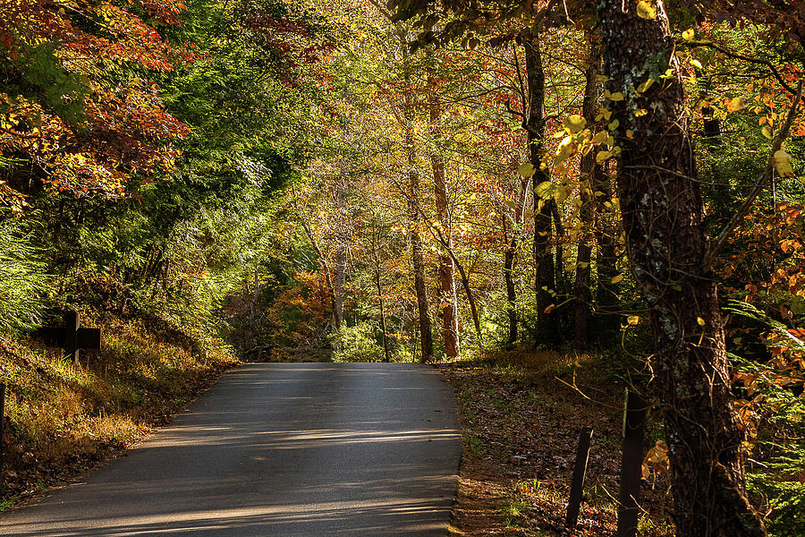 Autumn Road by Douglas Tate