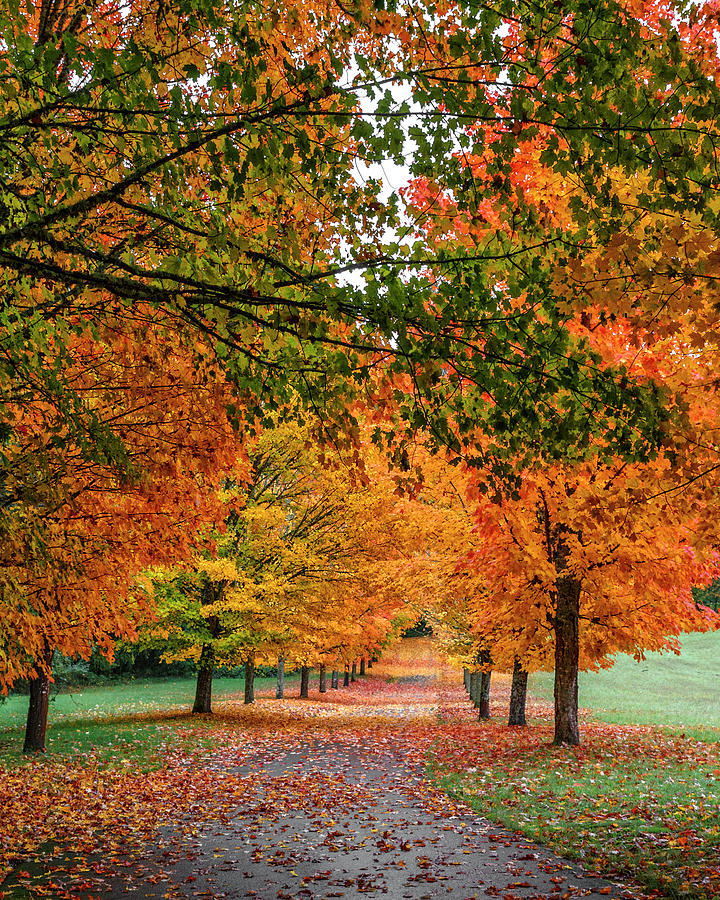 Autumn Road by Wes and Dotty Weber