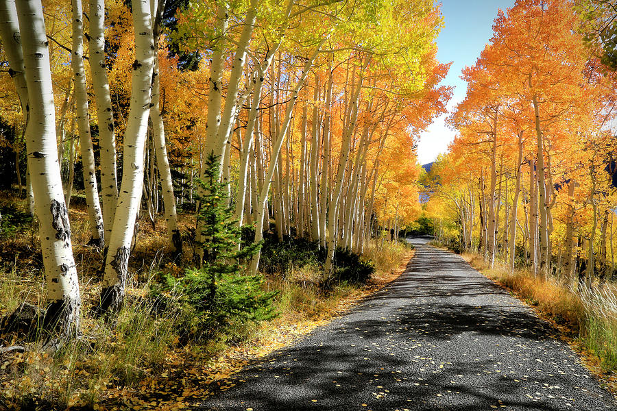 Fishlake National Forest Photograph - Autumn Roads by Donna Kennedy