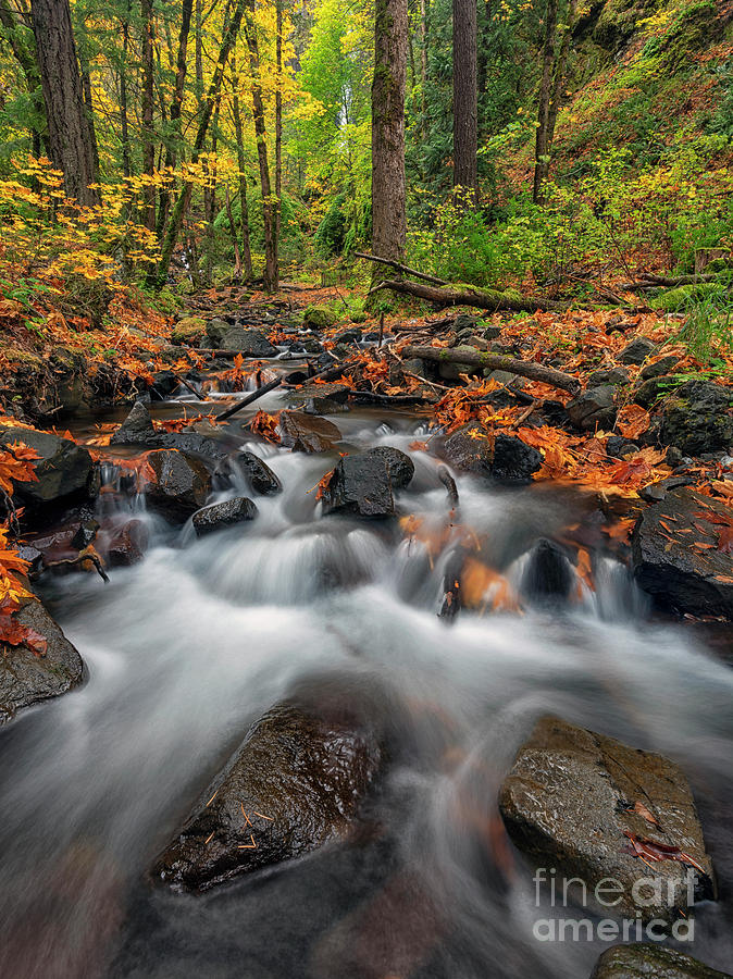 Autumn Rushed by Mike Dawson