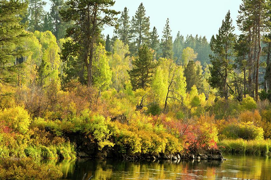 Autumn Photograph - Autumn Scene, Deschutes River by Michel Hersen