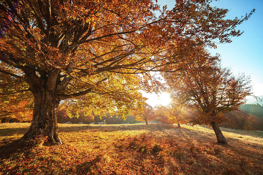 Autumn scenery with dry leaves and sunshine. Autumn Trees and Leaves in sun  light Photograph by Paraschiv Alexandru-Serban