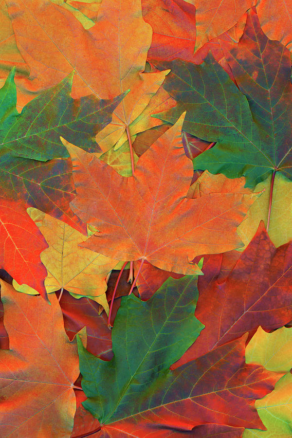 Autumn Season Leaves Photograph by Thinkstock Images