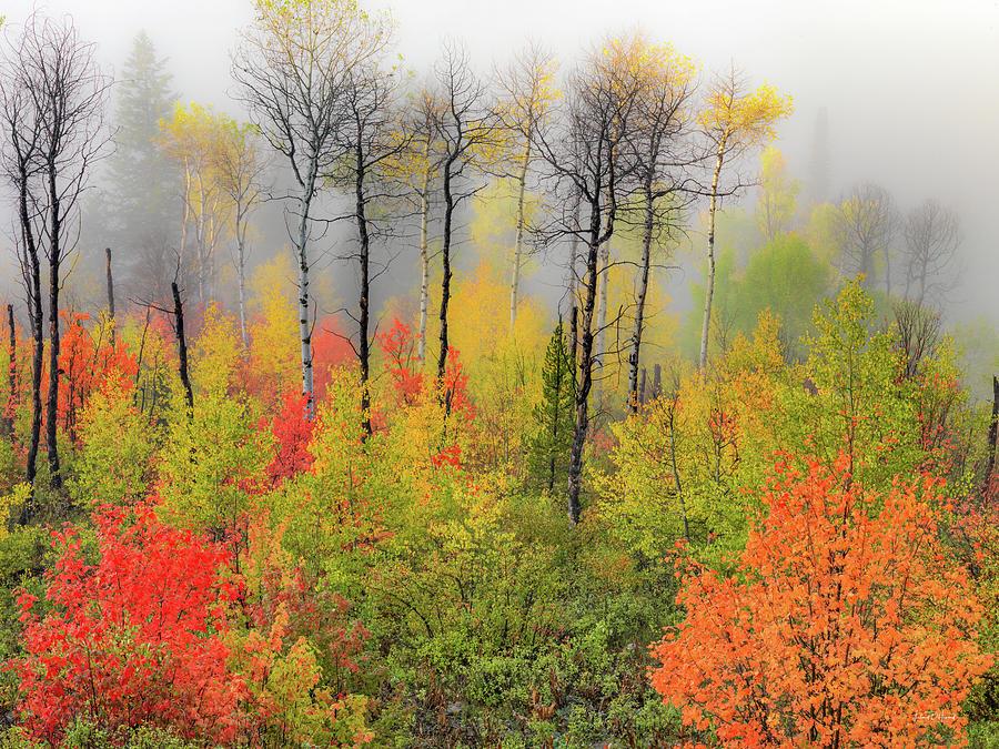 Aspen Forest Photograph - Autumn Shades by Leland D Howard