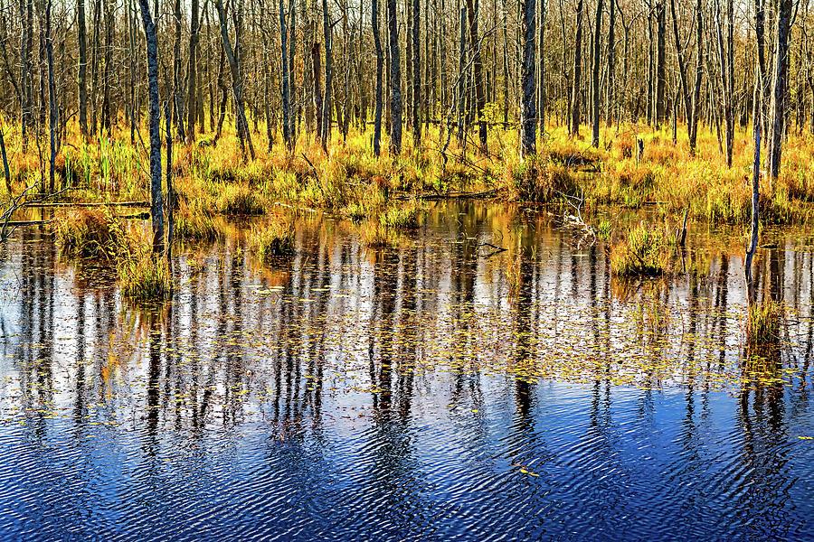 Autumn Slough 4 Photograph