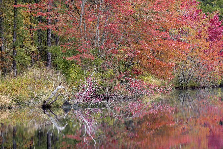 Autumn Splendor by Charles Aitken