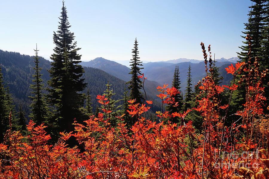Autumn Splendor by Sylvia Cook