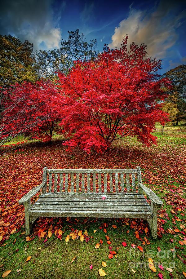 Autumn Photograph - Autumn Splendour by Adrian Evans