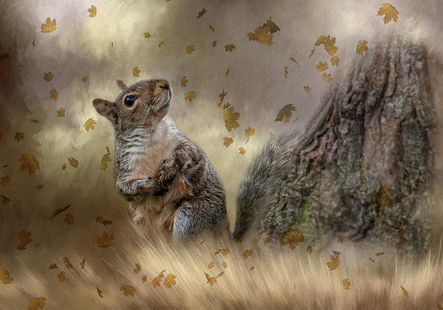 Autumn Squirrel  by Kelley Parker