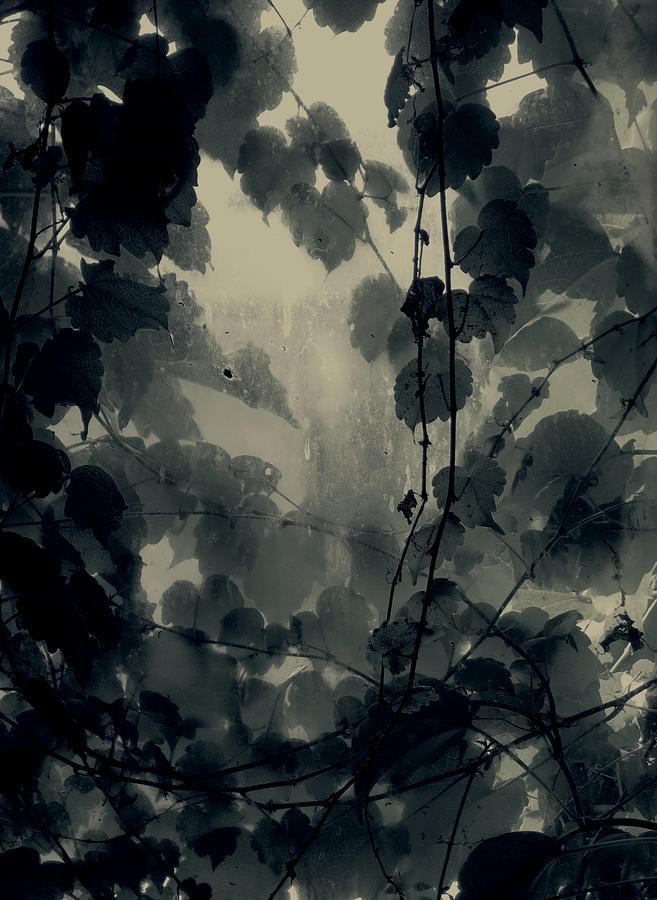 Still Life Photograph - Autumn Still Life by Roman Aj