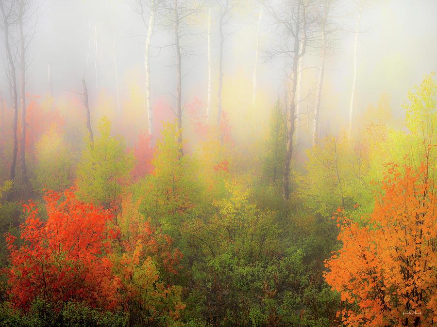 Aspen Forest Photograph - Autumn Stillness 2 by Leland D Howard