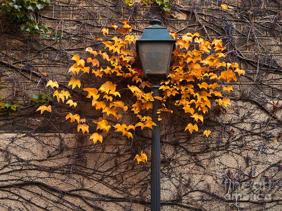 Vibrant Color Photograph - Autumn Street Lamp. Paris. Montmartre by Artens