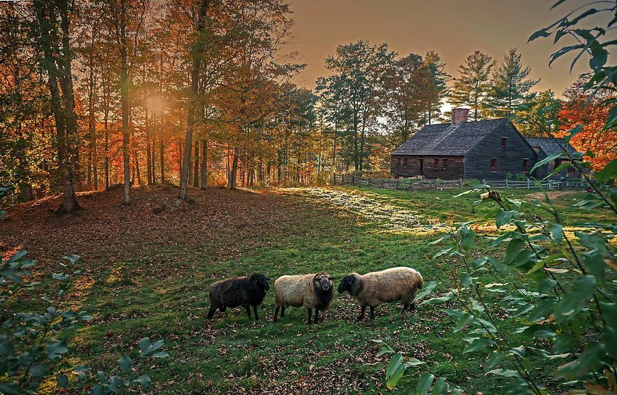 Autumn Photograph - Autumn Sunset At The Old Farm by Wayne Marshall Chase