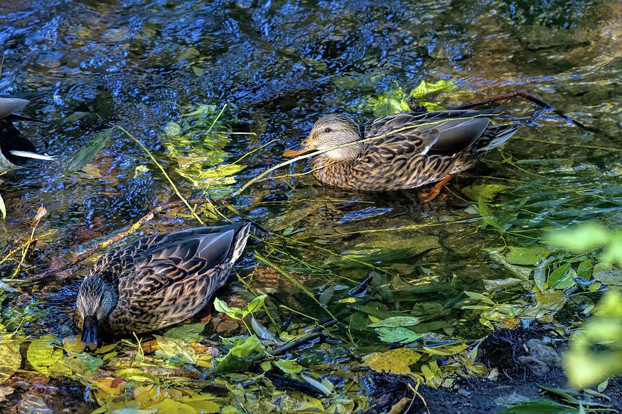Autumn Swim Photograph by Alana Thrower