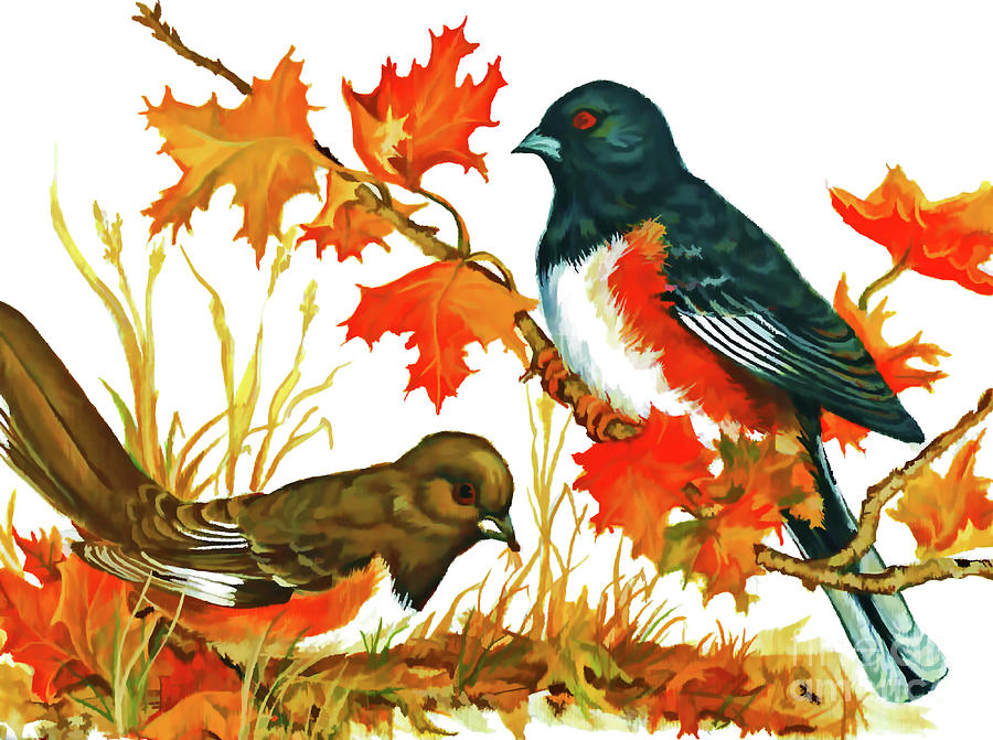 Autumn Towhees  by D Hackett