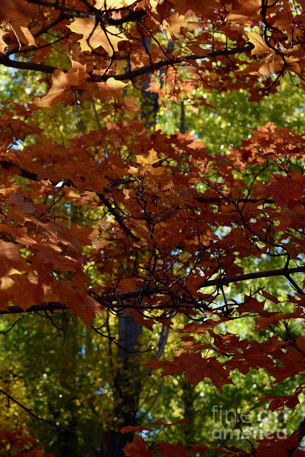 Autumn Tree - Foliage #7 by Gem S Visionary