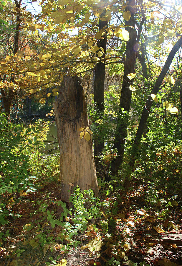 Autumn Tree Stump by Ellen Tully