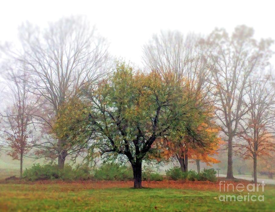 Autumn Trees in the Fog 2 by Kerri Farley