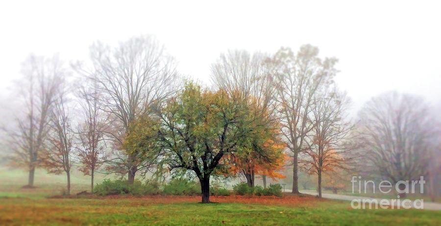 Autumn Trees In the Fog - Panorama  by Kerri Farley
