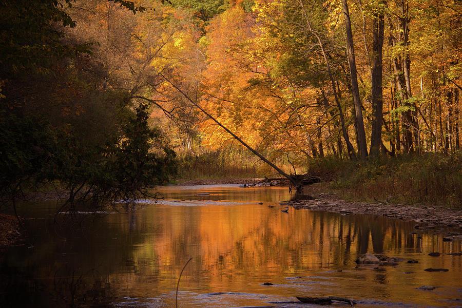Autumn Trees Photograph by Lynda Murtha