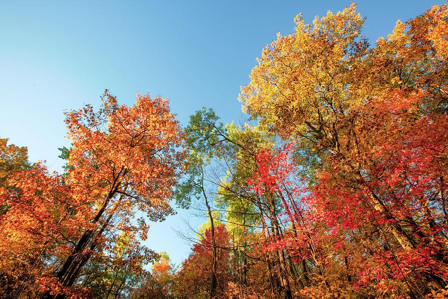 Autumn Photograph - Autumn Trees by Todd Klassy