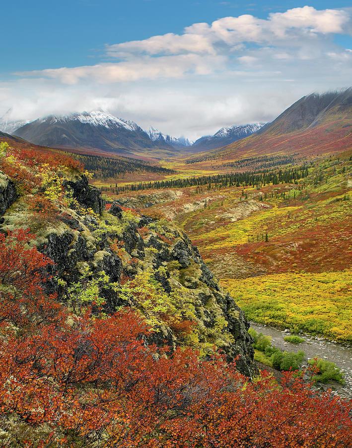 Autumn Tundra, Tombstone Range, Tombstone Territorial Park, Yukon Photograph by Tim Fitzharris