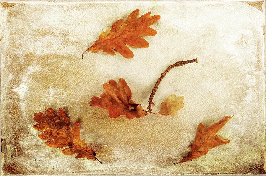 Autumn Twist Photograph