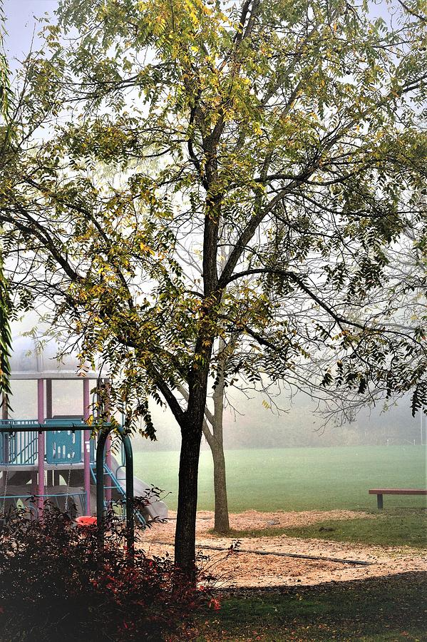 Autumn View With Fog Photograph
