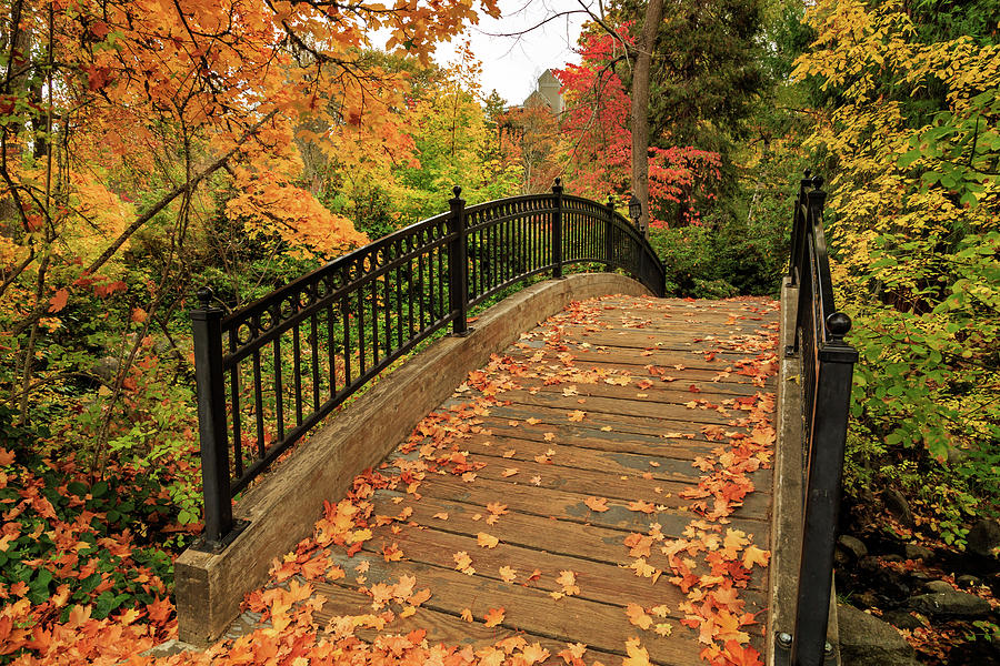 Autumn Walkway Bridge by James Eddy