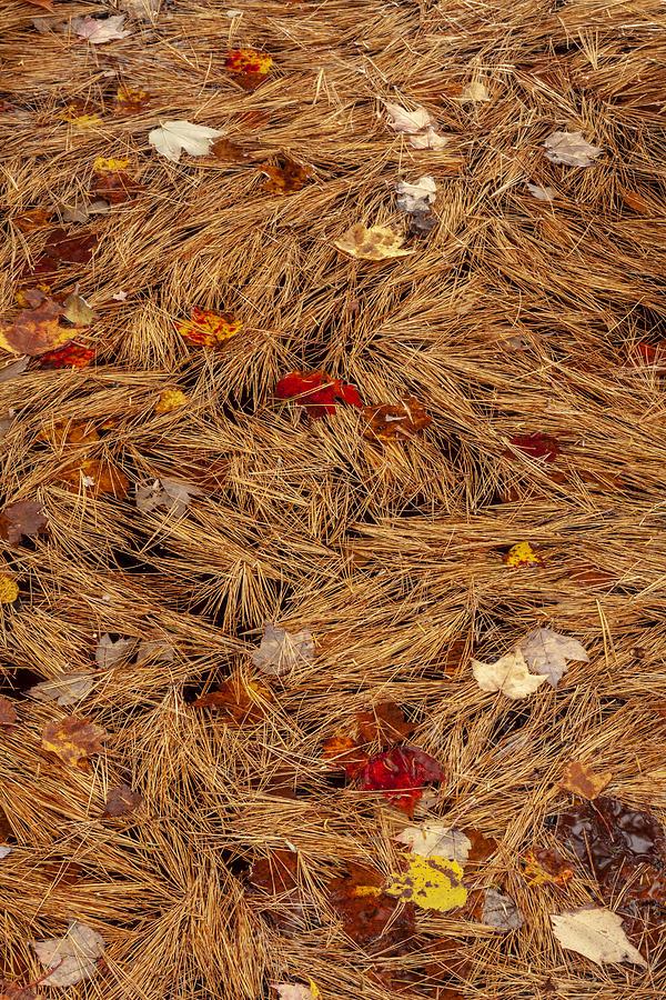 Autumn Weave by Irwin Barrett